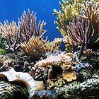 Aquarium by Ashley Wells
