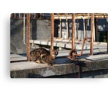 Rusty Cat Canvas Print