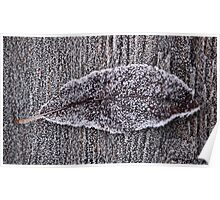 Leaf with frost Poster