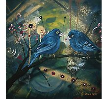Bluebirds sitting on a Branch Photographic Print