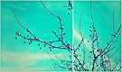 berry tree by Angel Warda