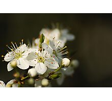 Blossoms in Spring time Photographic Print