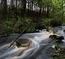 Harewood Forest Trail Creek by Sandra Chung