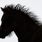Shetland pony foal silhouette B/W by Frances Taylor
