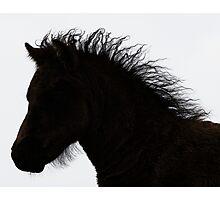 Shetland pony foal silhouette B/W Photographic Print