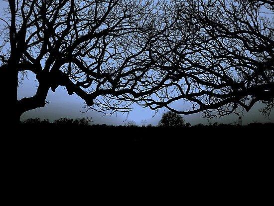 Love Affair of Trees by Dawn di Donato