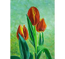 Tulips for Rick Photographic Print
