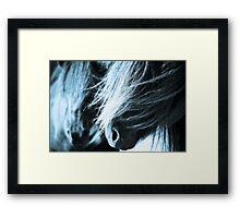 Shetland pony mares Framed Print