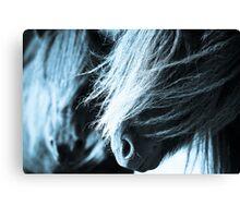 Shetland pony mares Canvas Print