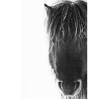Shetland pony with ice Photographic Print
