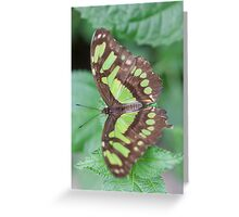 butterfly on the flower Greeting Card