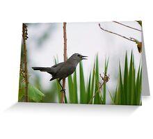 Gray Catbird singing to me Greeting Card
