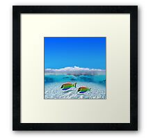 Gay Fishes in Polynesia Framed Print