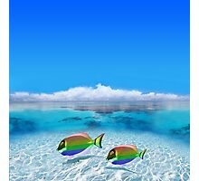 Gay Fishes in Polynesia Photographic Print