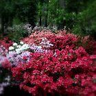 A Carpet of Azaleas in Ruby M. Mize Azalea Garden by Dawn di Donato