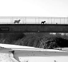 Watch Dogs by Rod Johnson
