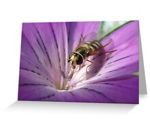 Corncockle Hoverfly Greeting Card