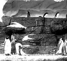 penguins by Megan  Daugherty