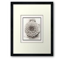 Black white Dahlia square format Framed Print