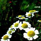 Little Miss Daisies by grarbaleg