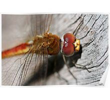 Red/Golden Dragonfly Poster