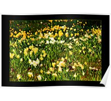 Spring Flowers II Poster
