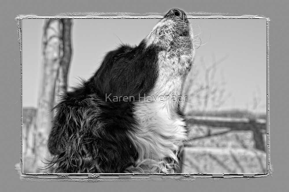 Howling by Karen Havenaar