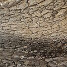 river of bark by Jim Prince