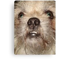 JACK THE WOOKIE Canvas Print
