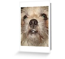 JACK THE WOOKIE Greeting Card