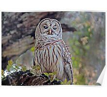 Buschman Park Owl Poster