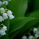 Lily of the Valley by Diane Blastorah