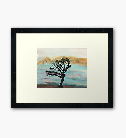 Very Wind Blown Torry Pine, watercolor Framed Print