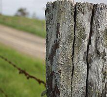Fence Series 1-1 by Elizabeth Wilson-Barnett