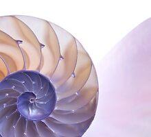 nautilus by Jason Kaiser