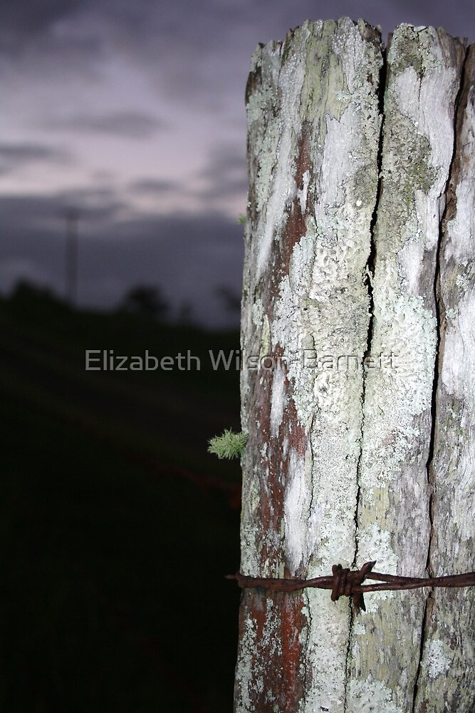 Fence Series 1-3 by Elizabeth Wilson-Barnett