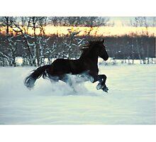 Friesian Stallion fun in the SNOW Photographic Print