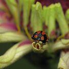 LadyBug Buttt!! by KiriLees