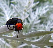 Orange and black beetle? by bobby1