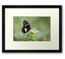 Sweet As - butterfly in Innisfail. Framed Print