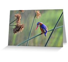 Colours......... Greeting Card