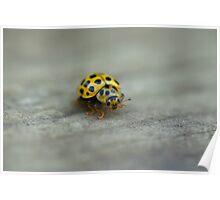 Yellow ladybug Poster