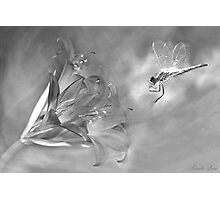 The Dragonfly and the Flower Photographic Print