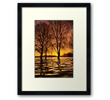 Warmth and Trees Framed Print