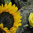 Sunflower by stellaclay