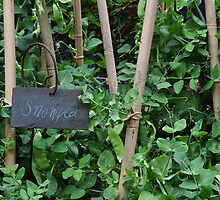 Snowpea plant by stellaclay by stellaclay