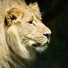 Lion by Jenny1611