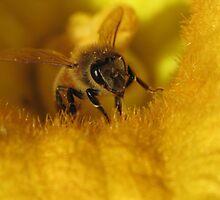 Pollinated Bee! by KiriLees