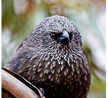 Apostle Bird...or so I am told Photographic Print