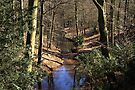 Spring Stream in the Forest by Jo Nijenhuis